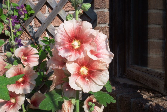 Susan Elliotson's Herb Garden