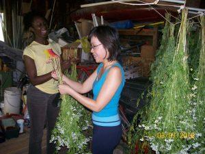Susan Elliotson's Herb Garden Experience