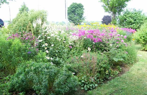 Susan Elliotson's Herb Garden - Centre Bed