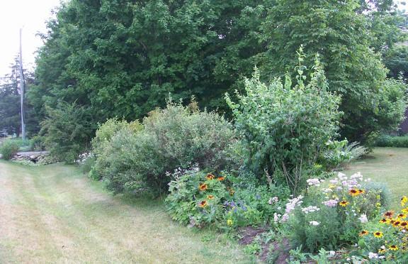 Susan Elliotson's Herb Garden - Front Bed