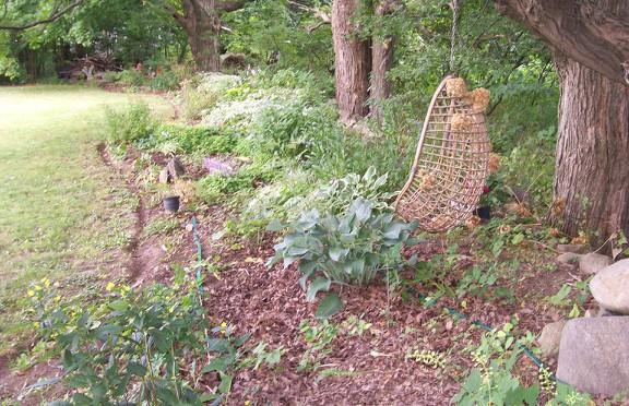 Susan Elliotson's Herb Garden - Under the Maples