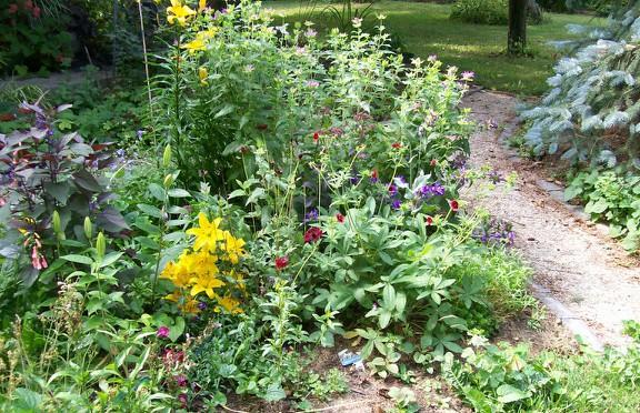 Healing Herb Garden
