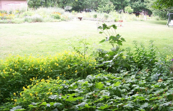 Susan Elliotson's Herb Garden under the maples