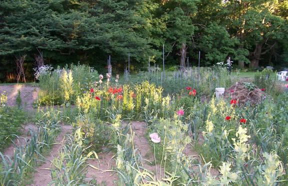 Susan Elliotson's Herb Garden - Veggie Garden